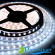 96 pcs LEDs/m IP68 Flexible Strip Led Lights