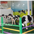 Animatronic Cow With Movements And Sound