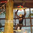 Orangutan for Rainforest Restaurant