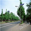 LED Roadway Lighting 60W