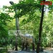 Big size herbivorous Omeiosaurus
