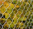 Chain Link Field Fence