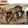 Dinousar Skeleton Model
