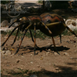 Big Size Spider Simulation Model