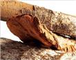 Cinchona bark extract