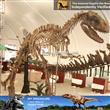 Exhibition Dinosaur Skeleton Replica Exporters