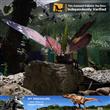 Animatronic Insect Model B