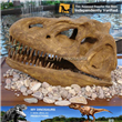 Display Equipment Dinosaur Head Fossil